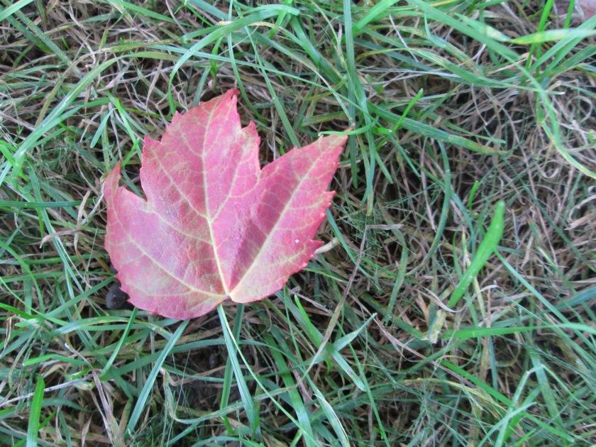 a single fallen leaf.jpg