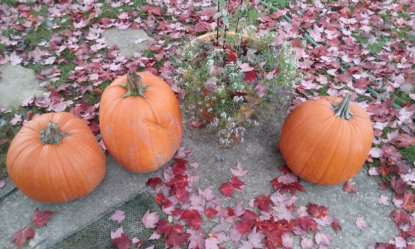 a-trio-of-pumpkins