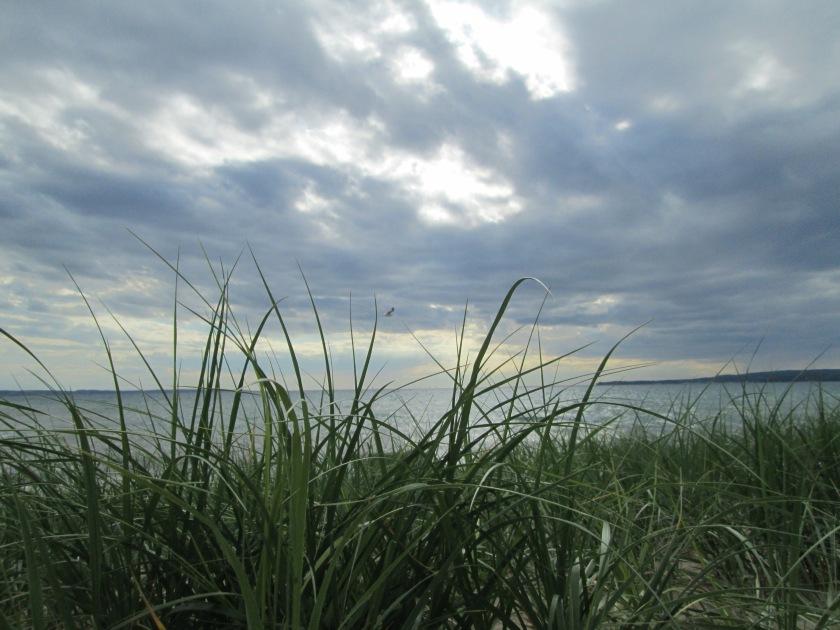 gull-afloat