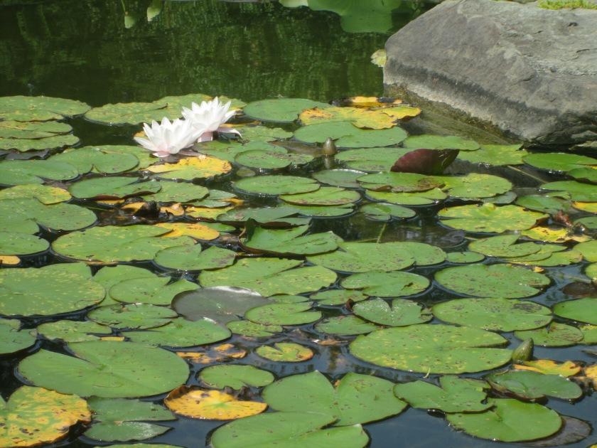 pond-view